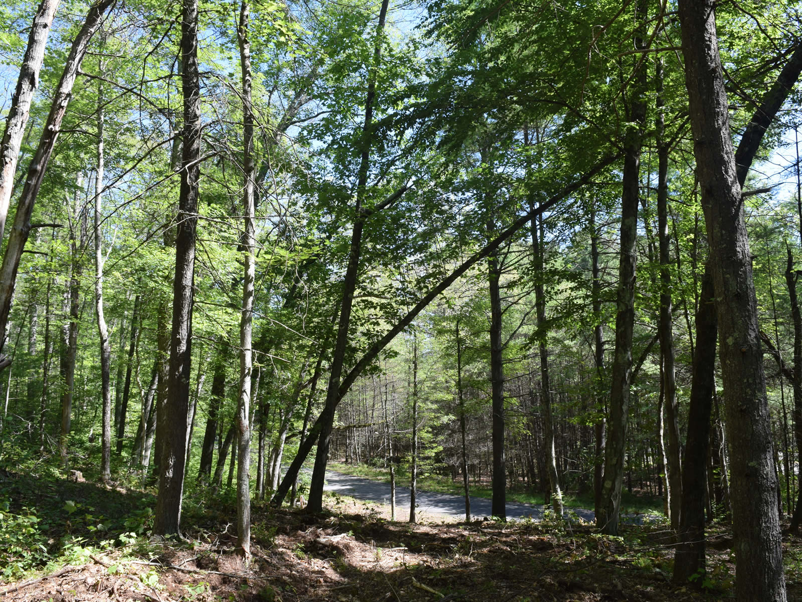 Western Massachusetts Land for Sale Ware Quabbin